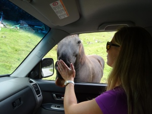 Tonje persuading the local alpine horsie to stay out of the passenger-seat. Close call..